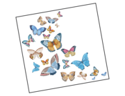 Lieferansicht Autoaufkleber Butterflies in Watercolor XS