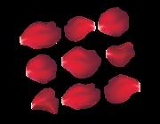 Lieferansicht Autoaufkleber Rote Rosenblätter XS