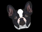 Lieferansicht Autoaufkleber Französische Bulldogge Sparky XS