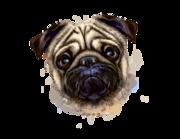 Lieferansicht Autoaufkleber Samson der Mops Hund XS