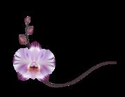 Lieferansicht Autoaufkleber Orchidee Violetta XS