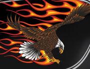 Autoaufkleber Burning Bald Eagle XS