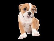 "Wandtattoo ""Baby-Bulldogge Bosse"" Lieferansicht"