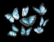 Wandtattoo Blaue Morpho-Schmetterlinge Lieferansicht