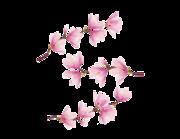 Lieferansicht Wandtattoo Magnolienzweig Honoki