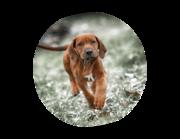 Lieferansicht Wandtattoo Hund Ari