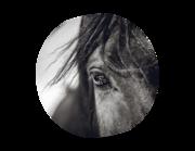 Lieferansicht Wandtattoo Pferd Zeus
