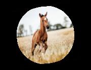 Lieferansicht Wandtattoo Pferd Jupiter