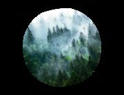 Lieferansicht Wandtattoo Im Nebelwald