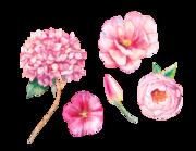 Lieferansicht Wandtattoo Pink Watercolor Flowers