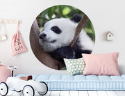 Wandtattoo Panda Baby Minhao