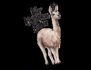 Lieferansicht Wandtattoo No Drama Llama