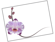 Lieferansicht Wandtattoo Orchidee Violetta