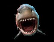 Lieferansicht Wandtattoo Weißer Hai