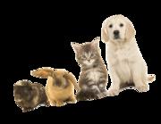 Lieferansicht Wandtattoo Kleine Tierfreunde