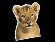 Lieferansicht Wandtattoo Löwenbaby Nala