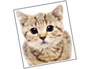 Lieferansicht Wandtattoo Katze Mojo