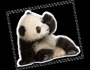 Lieferansicht Wandtattoo Panda Baby Bao Tao