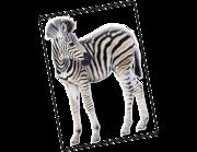 Lieferansicht Wandtattoo Zebra Baby Asali