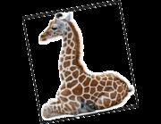 Lieferansicht Wandtattoo Giraffenbaby Rabia