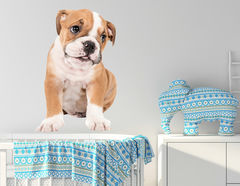 "Vorsicht Hundeblick! Unser Wandtattoo ""Baby-Bulldogge Bosse"""