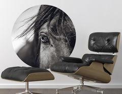 Wandtattoo Pferd Zeus