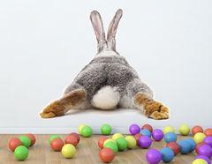 Wandtattoo Bunny Life